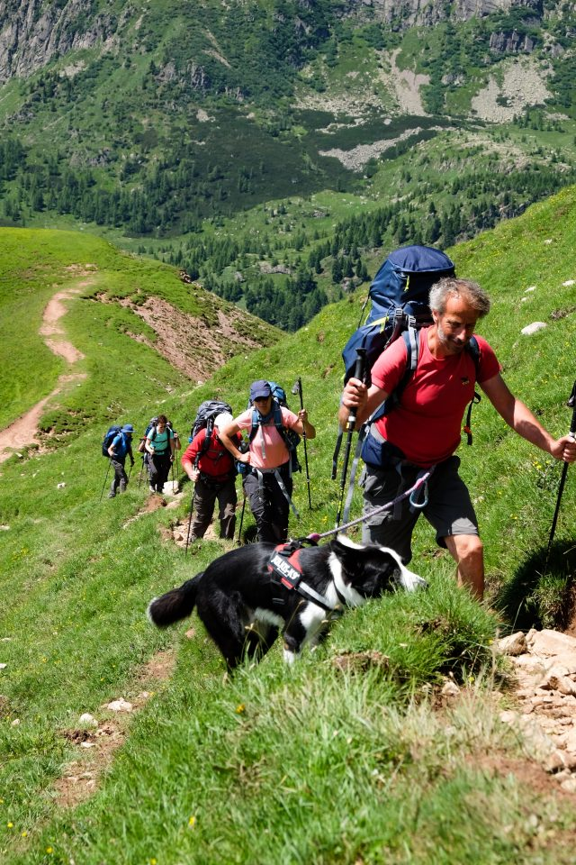 dog-trekking-trekkilandia-alta-via-dolomiti