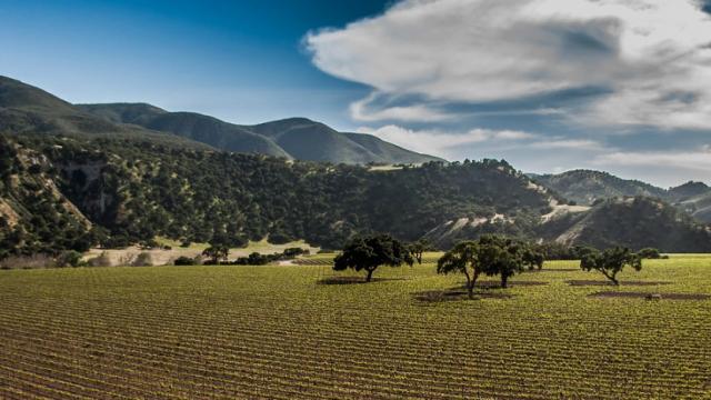 viaggio-parchi-americani-colline-california