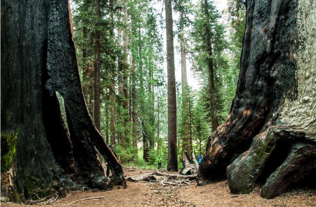 parchi-americani-sequoia-national-park